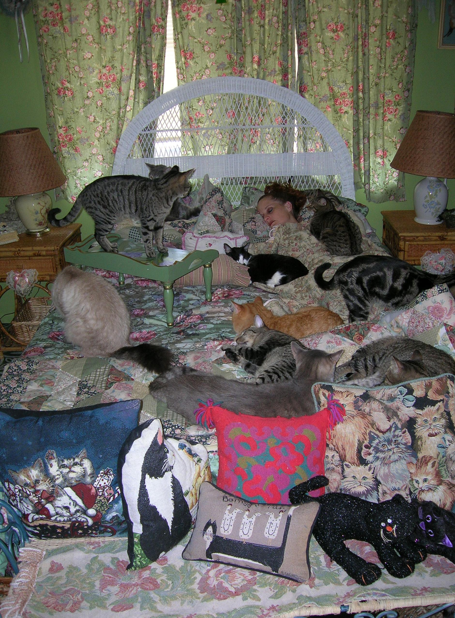 Jan07116174.tmp/Kittiesonbed.JPG